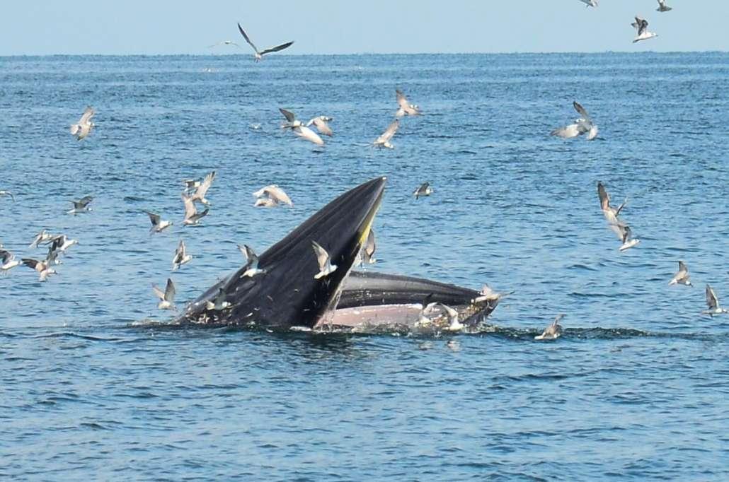 หาดเจ้าสำราญ วาฬบรูด้า.jpg